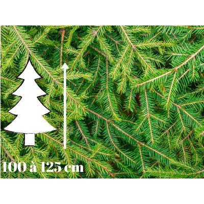 Sapin de Noël Epicéa - 100 à 125 cm - Qualité Premium