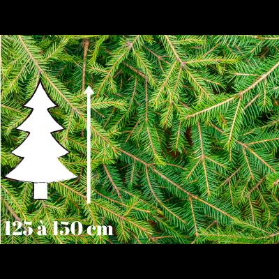 Sapin de Noël Epicéa - 125 à 150 cm - Qualité Premium