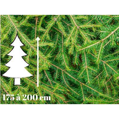 Sapin de Noël Epicéa - 175 à 200 cm - Qualité Prémium